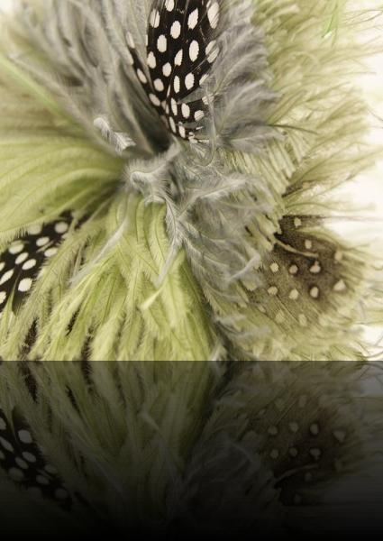 Fleur d'autruche
